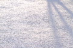 Snow background with tree shadow Stock Photo