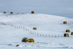 Hay bales in a snowy field, cowboy Trail, Alberta, Canada. Snow bales partially covered in snow poking up from a blanket Royalty Free Stock Image