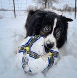 Snow Ball Stock Image
