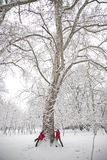 Snow ball fight. Young couple in a snowball fight, hiding over a tree Royalty Free Stock Images