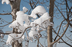 Snow on bare branches Stock Image