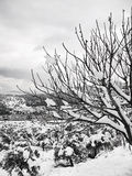 Snow on Bare Branches royalty free stock images