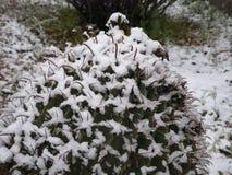 Snow on Barrel Cactus in Tucson AZ. It snowed in Tucson Arizona. This barrel cactus is covered in snow stock photos