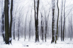 Snow in a beautiful forest with fog Stock Images