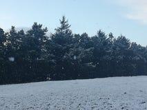 Snow is beautiful stock photo