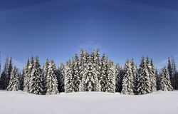 Snow beauty stock image