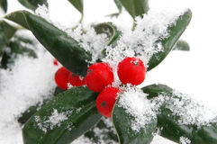 Snow berries Royalty Free Stock Photo
