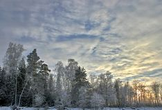 Snow birch forest and sunset Stock Photography