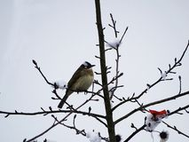 Snow and bird stock images