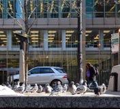 Snow Birds Royalty Free Stock Photo
