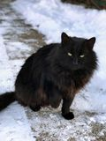 Snow black cat. Black cat sitting on a snow-covered path Royalty Free Stock Image