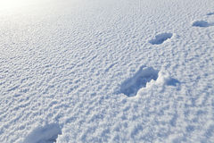 Snow blanket with footsteps royalty free stock photography
