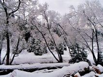 Snow blanket stock photo