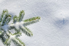 Snow blanketed pine branch. Creating a nice holdiay background Royalty Free Stock Photography
