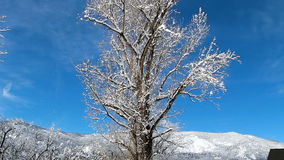 Snow Blowing Off Bare Branches Of Tree. Snow Blowing Off Covered Branches Of Tree Against Blue Sky And Hills stock footage