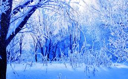 Snow. Blue winter in Stock Image
