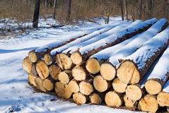 Snow bound firewoods. Snow bound stack of wood of firewoods Stock Photos