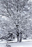 Snow-bound trees in a park Royalty Free Stock Image