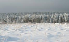Snow-bound trees Royalty Free Stock Photos