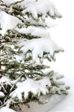 Snow bounded xmas tree. Branches Royalty Free Stock Photo