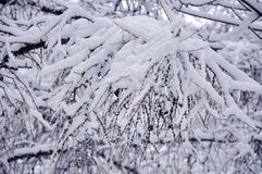 Snow branch Stock Images