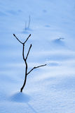 Snow branch Stock Photography