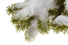 Snow branch Royalty Free Stock Photos