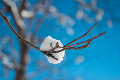 Snow on a branch Royalty Free Stock Photos