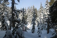 Snow branch firs canadian winter vancouver. Canadian Winter is amazing Stock Photos