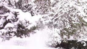 Snow branch shaking stock video