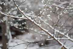 Snow on a branch. Royalty Free Stock Photos