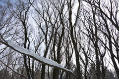 Snow on a branch of a tree Stock Photography