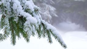 Snow branch winter. Snow covered branch in sun winter stock footage