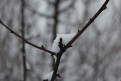 Snow on a branch. Winter snow gray siding in focus Stock Photos