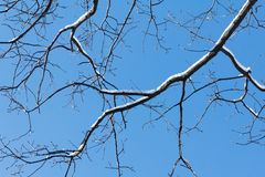 Snow on branch, winter nature frost outdoor. Season of white tree. Royalty Free Stock Photography