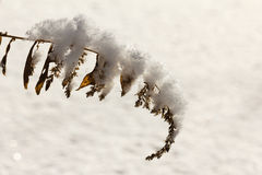 Snow on branch, winter nature frost outdoor. Season of white tree. Royalty Free Stock Image