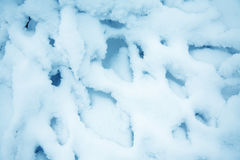 Snow on branches Royalty Free Stock Photos