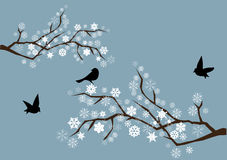 Snow branches. With black birds Royalty Free Stock Photos
