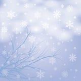Snow branches Stock Photos