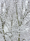 Snow branches Royalty Free Stock Photos