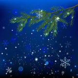 Snow branches Royalty Free Stock Photography