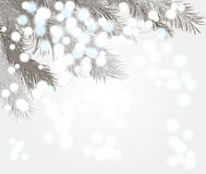 Snow on the branches Stock Photo
