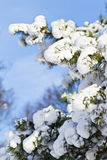 Snow on branches of tree Stock Photos
