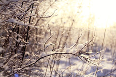 Snow on the branches of  tree Royalty Free Stock Images