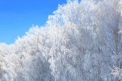 Snow branches on the tree at blue sky background. Christmas. Royalty Free Stock Image
