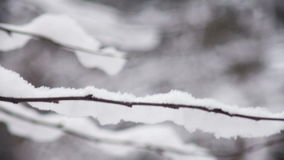 Snow on the branches of tree. Close up shot of snow on the branches of tree stock video footage