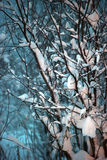 Snow on the branches of a tree in the evening Stock Photo