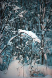 Snow on the branches of a tree in the evening Royalty Free Stock Photography