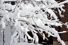 Snow Branches Royalty Free Stock Images