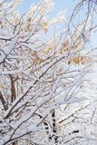 Snow on the branches of a tree Stock Photos